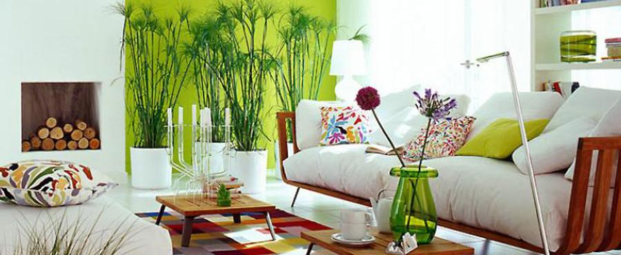 De todo un poco las plantas y el feng shui for Feng shui plantas entrada casa