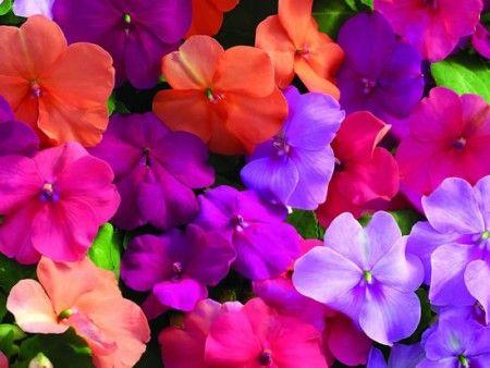 planta-colores