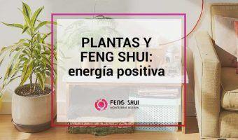 plantas y feng shui