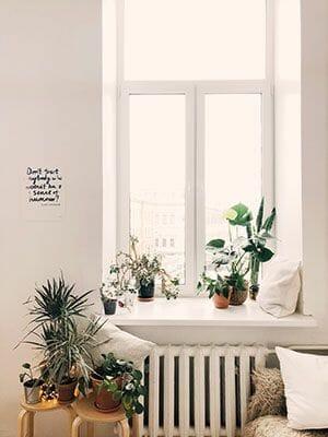 ventana plantas